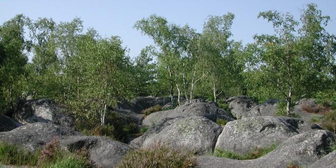Forêt de Fontainebleau, Gorges de Franchard