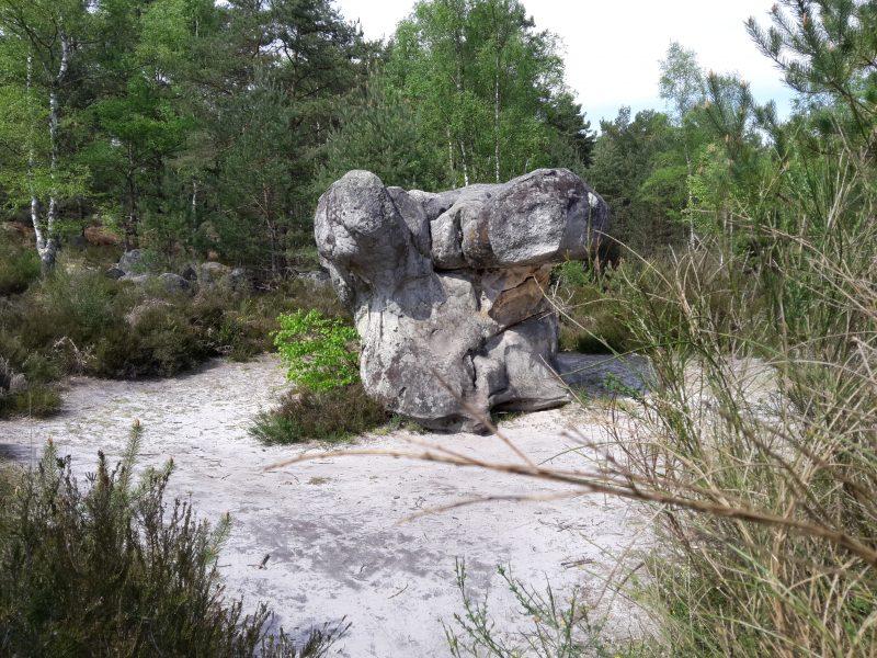 Forêt de Fontainebleau, proche du canal le long du Loing